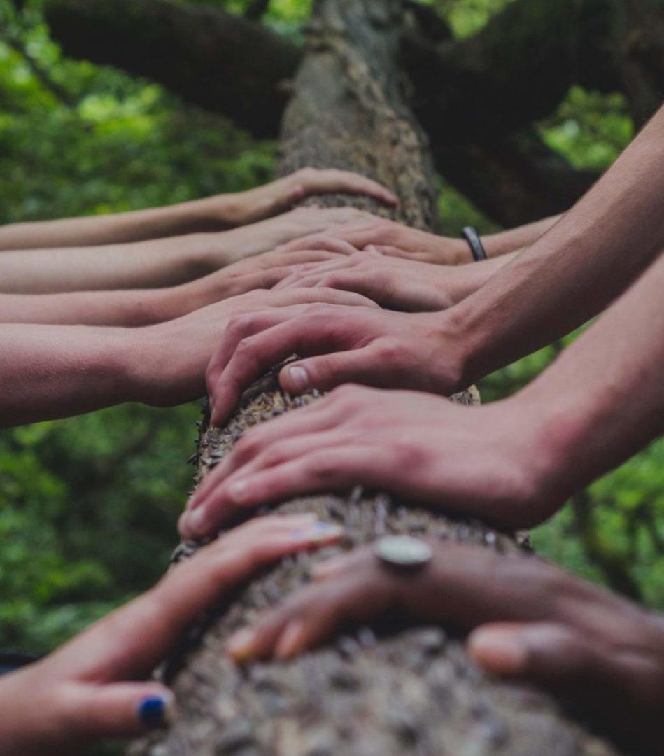 5 Haendepaare nebeneinander auf Baumstamm-Original